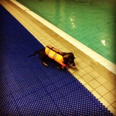 uimahallilla