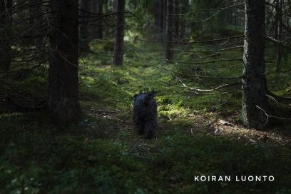 Dogintheforest2-01