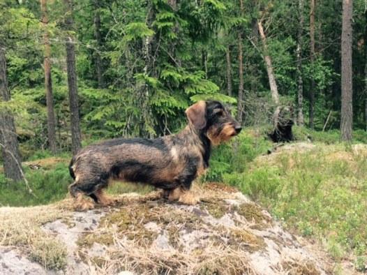 metsässä tutkimassa