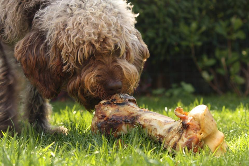 koira ja luu 2