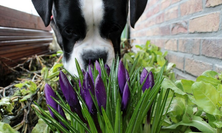 kukka ja haju