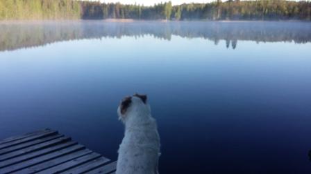 Terrieri ja kesäyö järvellä