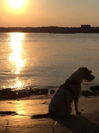 Terrieri, meri ja aurinko