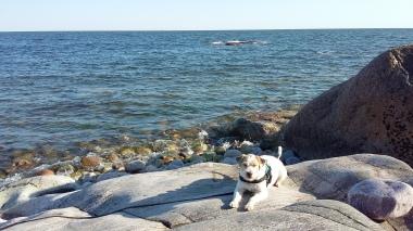 Terrierin tauko rannalla
